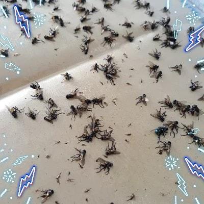 Cara simple membuat lem anti lalat